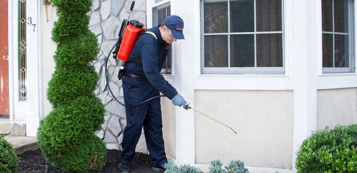 خدمات رش المبيدات الحشرية - petition