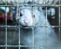 BAN Fur Farming in Japan