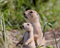 Save prairie dogs & wildlife in Spring Gulch open space