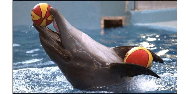 Cancel Dolphin Performance at Sochi 2014 Olympics