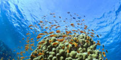 Protect the Oceans from Devastating Acidification