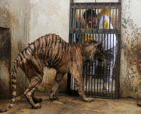 FOOD FOR SURABAYA ZOO ANIMALS IN EAST JAVA, INDONESIA: PLEASE, DONATE, ZOOFOOD.COM AND MAZURI ZOO FO