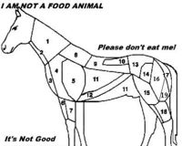 AMERICAN HORSEMEAT UNFIT TO EAT!