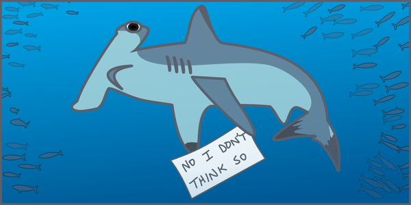 Hammerhead Shark Reproduction | Petition Stop The Imprisonment Of Two Hammerhead Sharks In A Very