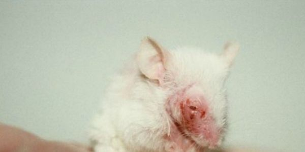 Stop the testing of legal highs on animals in New Zealand!
