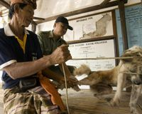 INDONESIA: BALI GOVT. KILLS DOGS WITH STRYCHNINE TO CONTROL RABIES & STRAY DOG POPULATION
