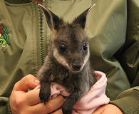 Stop Plans to Kill Wallabies