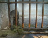 Save Young Zimbabwe Elephants From Kidnapping for Chinese Zoos