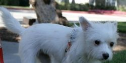 Stop The Cruel Dog and Cat Meat Trade In South Korea