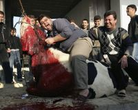 Ban Halal killing under EU law!