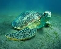 Protect Turtles and Dugongs from Cruelty in QLD (Australia)