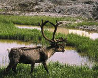 Keep the Arctic Refuge Wild!