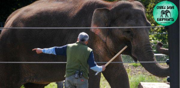 Elephant, Care2