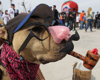 Stop Abusing Coffee! The dog is forced to sit with a pipe