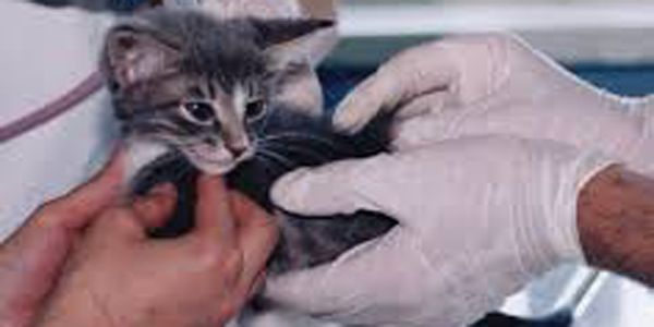 Stop non-medical animal testing