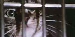 Stop the UK Government from legalising the use of stray pets in lab experiments!