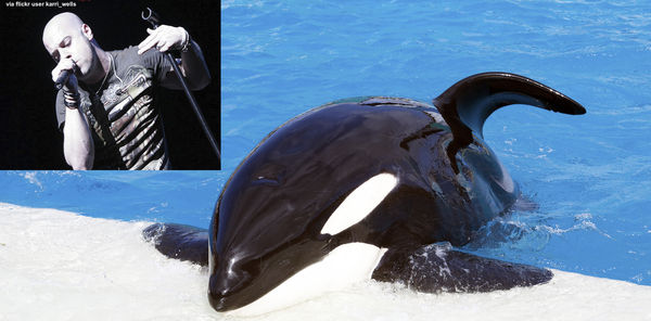 Daughtry: Don't Support SeaWorld - Orcas Deserve Better!