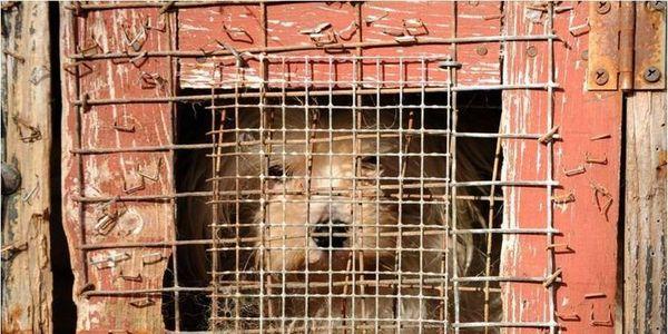 Maltraitance ANIMAUX  domestiques  chiens chats lapins etc  - Page 5 283610-1493492631-wide