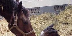 Stop Killing Foals for Hormone Replacement Drug
