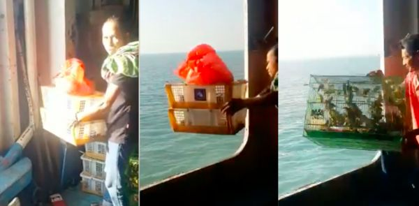 Screenshots of people tossing exotic animals into sea