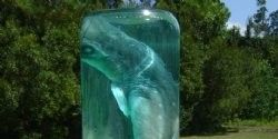 "Stop Atlantic Coral Enterprise from Selling ""Shark in Glass Bottle"""