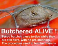 Tell Tesco Stop Selling Live Turtles