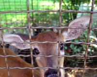 Ban Fenced Hunting in Indiana!