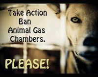 Ban Gas Chambers in the U.S.