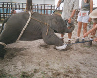 Stop Animal Shows in Circus around the world !!