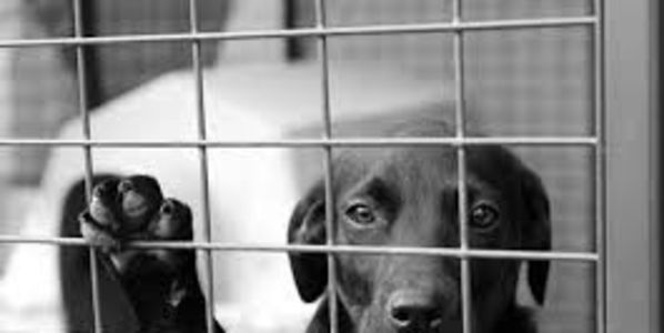 EU legislation threatens the lives of Irish rescue dogs.