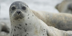 Demand The End Of The Seal Hunt In Canada Now!