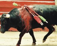 Stop torturing and killing animals in Andaluc�a (Spain)!