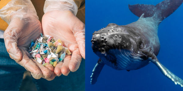 Plastic and marine animal