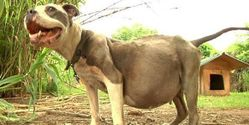 Prosecute Owner of Dog in Poor Abused Condition!!