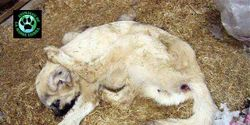HORROR, VIOLATION OF ANIMALS IN TURKEY