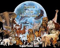Make Murder/Abuse of All Animals Illegal