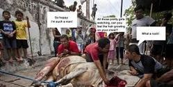 STOP ILLEGAL OPEN SLAUGHTER OF COWS IN SOUTH INDIA AND WEST BENGAL