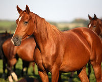 Pass the Horse Slaughter Protection Act