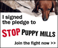 Stop all Puppy Mills now