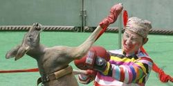 Demand that the Mississippi & Indiana Nat'l guards cancel illegal kangaroo boxing matches