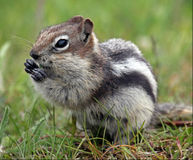 Stop Poisoning Ground Squirrels