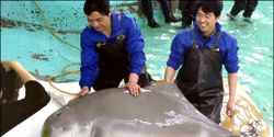 SAVE BAIJI THE CHINESE RIVER DOLPHIN