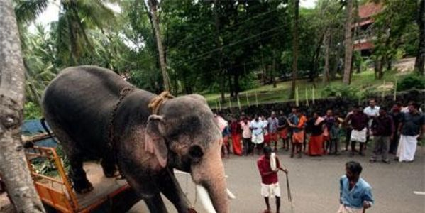 Stop the torture and exploitation of Rama, India's most famous show elephant