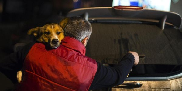 Send love to volunteers that are smuggling stray dogs out of Sochi