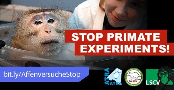 Stoppt PRIMATENVERSUCHE!  - ESPERIMENTI ARRESTO primate!