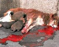 Tell the Serbian government to stop ignoring animal cruelty!