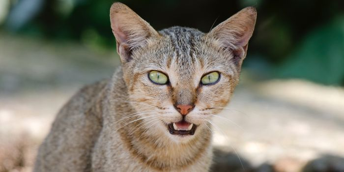 Don't Let Australia Poison And Kill Millions Of Stray Cats!