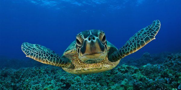 Save the Great Barrier Reef from an environmental disaster