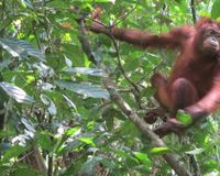 Make the presence of Palm Oil and Palm Kernel Oil compulsory on NZ food labelling