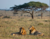 Don't Sell the Serengeti to Big Game Hunters